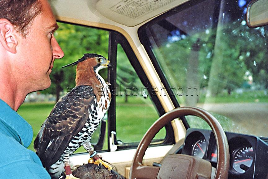 قیمت پرنده قوش Baguseven 'blog
