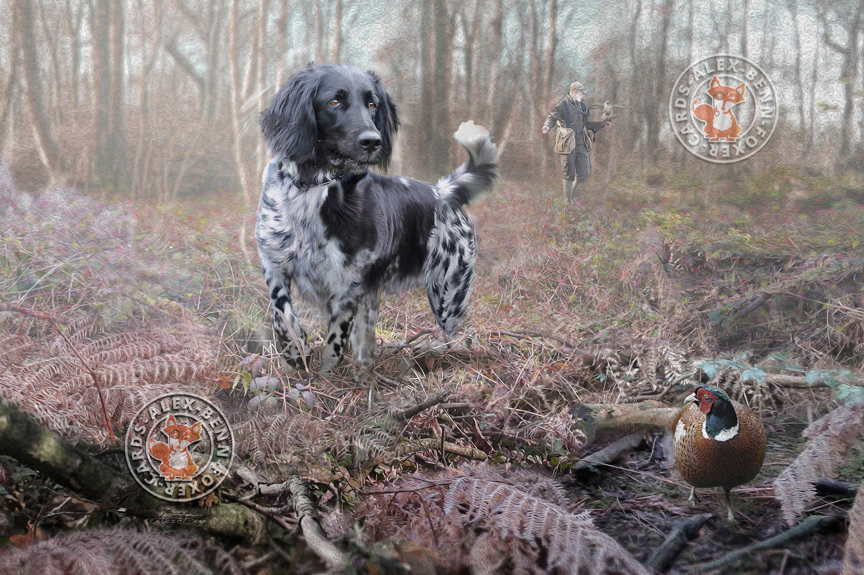 Alex Benn Munsterlander falconry dog