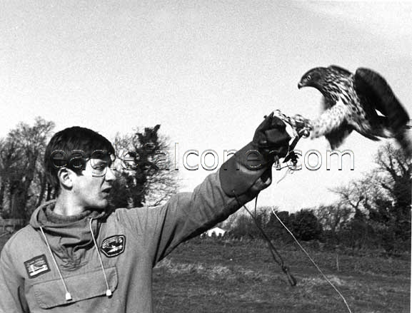 Training a goshawk