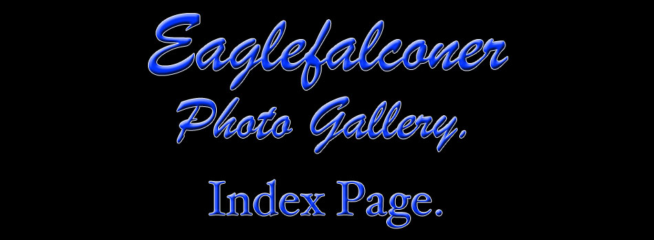 Falconry Photo Gallery